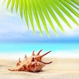 Concha marina en la playa arenosa y la hoja de palma Fotografía de archivo libre de regalías