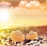 Concha marina en la playa de los guijarros Imagenes de archivo