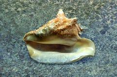 Concha marina en orilla Foto de archivo