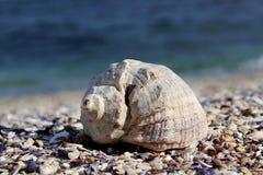 Concha marina en playa Fotos de archivo