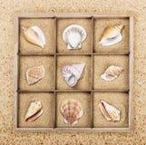 Concha marina en una caja de madera con la arena Fotografía de archivo
