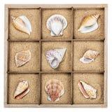 Concha marina en una caja de madera con la arena Foto de archivo