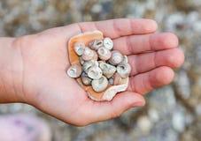 Concha marina en una mano de los niños Imagenes de archivo