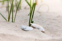 Concha marina en una playa foto de archivo libre de regalías