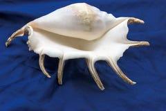 Concha marina hermosa del océano de South Pacific en tela azul Imagen de archivo