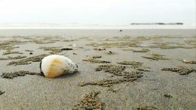 Concha marina por los sesides Foto de archivo libre de regalías