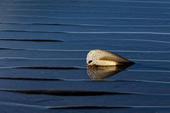 Concha marina retroiluminada en la playa de las kinas fotografía de archivo libre de regalías