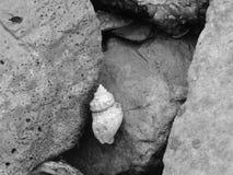 Concha marina simple Imagen de archivo libre de regalías