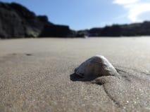 Concha marina solitaria Imagen de archivo libre de regalías