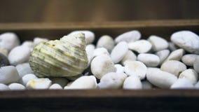 Concha marina video en el ajuste blanco del guijarro para los elementos del verano metrajes