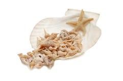 Conchas de berberecho del mar Imagen de archivo
