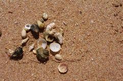 Conchas de berberecho del mar en la arena Fotos de archivo