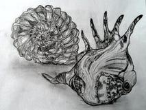Conchas de berberecho dibujadas mano del mar Imágenes de archivo libres de regalías