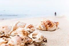 Conchas de berberecho en arena de mar Fotos de archivo