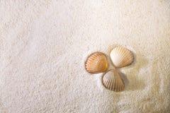 Conchas de berberecho en la arena Imagen de archivo libre de regalías