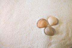 Conchas de berberecho en la arena Imagenes de archivo