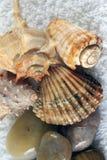 Conchas de berberecho en una toalla Imagenes de archivo