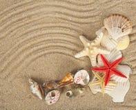 Conchas de berberecho y estrellas de mar hermosas foto de archivo libre de regalías