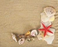 Conchas de berberecho y estrellas de mar hermosas en la arena fotografía de archivo