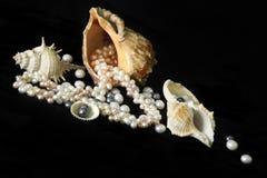 Conchas de berberecho y perlas del mar en un fondo negro foto de archivo