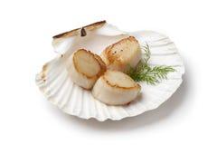 Conchas de peregrino chamuscadas servidas en un shell Imágenes de archivo libres de regalías