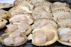 Conchas de peregrino con el shell que cocinan en parrilla Imagen de archivo