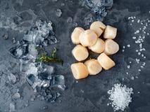 Conchas de peregrino crudas crudas con hielo en la textura gris de piedra imágenes de archivo libres de regalías