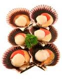 Conchas de peregrino de mar frescas Foto de archivo