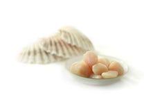 Conchas de peregrino del agua de mar Imagen de archivo