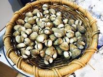 Conchas de peregrino grandes estupendas en una cesta Imagen de archivo