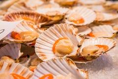 Conchas de peregrino para la venta en el mercado de pescados de Rialto - Venecia, Italia, Europa Fotografía de archivo libre de regalías