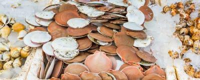 Conchas de peregrino vendidas en mercado fotos de archivo