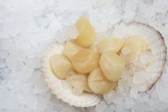 Conchas de peregrino y concha marina en el hielo imagenes de archivo