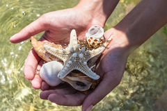 Conchas do mar à disposição na praia Imagens de Stock Royalty Free