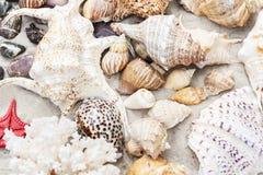 """Conchas do mar do †do fundo do verão da praia de Tailândia """"e estrelas de mar na areia, espaço da cópia para o texto imagem de stock"""