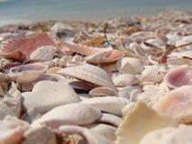 Conchas do mar Imagem de Stock Royalty Free