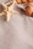 Conchas do mar imagem de stock