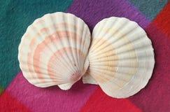 Conchas do mar bonitas em um fundo colorido Imagem de Stock Royalty Free