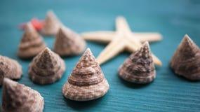 Conchas do mar, caracóis, o sol Composição, ainda-vida O conceito de férias e de humores de verão Fotografia de Stock