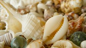 Conchas do mar coloridas misturadas diferentes como o fundo Vários corais, molusco marinho e shell de vieira video estoque