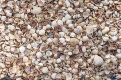 Conchas do mar como o fundo, coleção dos escudos do mar fotos de stock royalty free