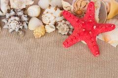 Conchas do mar da American National Standard da estrela do mar Fotos de Stock
