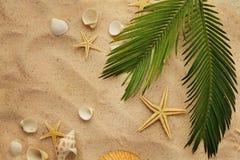 Conchas do mar e areia Fotos de Stock Royalty Free