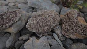 Conchas do mar e corais fossilizados vídeos de arquivo