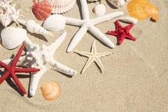 Conchas do mar e estrela do mar imagens de stock
