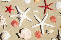 Conchas do mar e estrela do mar foto de stock