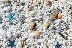 Conchas do mar e estrelas do mar coloridas no fundo pequeno branco dos seixos Imagens de Stock Royalty Free