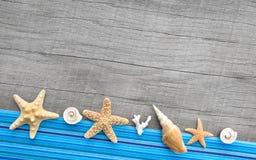 Conchas do mar e estrelas do mar no fundo de madeira cinzento Imagens de Stock