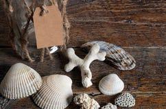 Conchas do mar e frasco de vidro Imagens de Stock Royalty Free