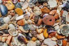Conchas do mar e fundo da textura dos seixos fotos de stock